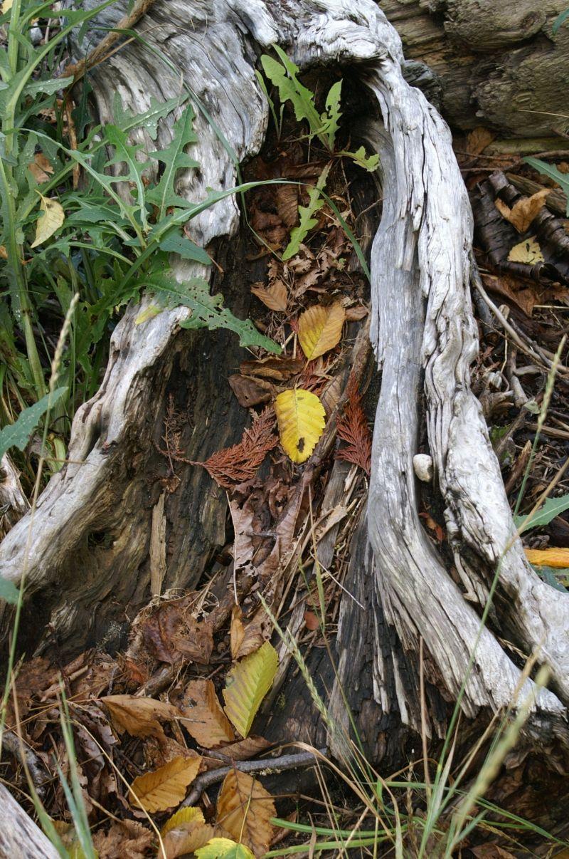 natures planter