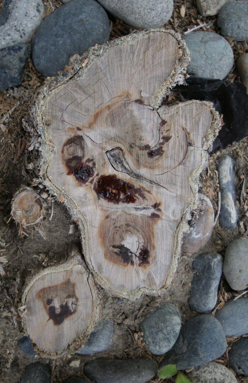 sticky stumps