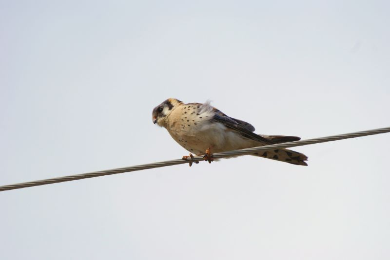 high wire act