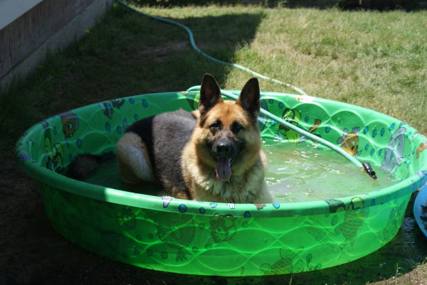 trying to stay cool