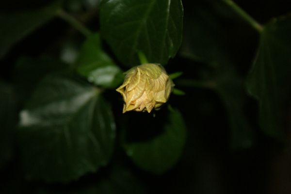 from bud to blossom #2