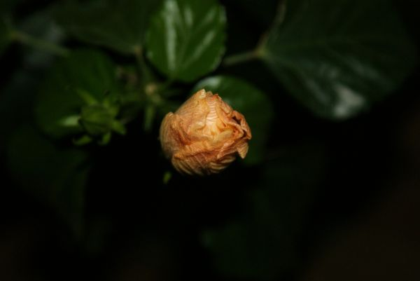 from bud to blossom #3