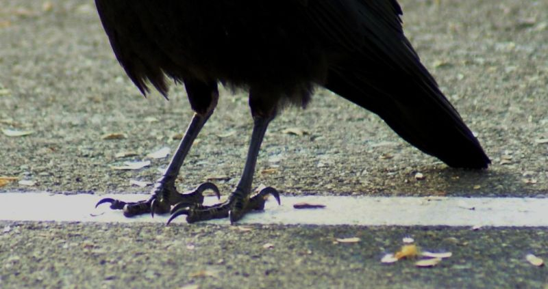 Crows Feet Animal Amp Insect Photos Double Kk Photography