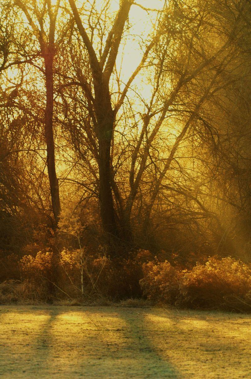 mystic woods