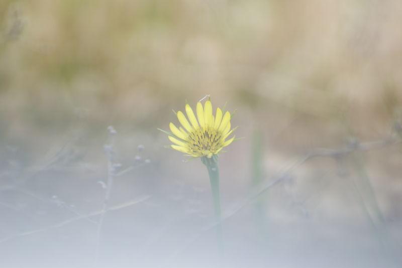 cloudy flower
