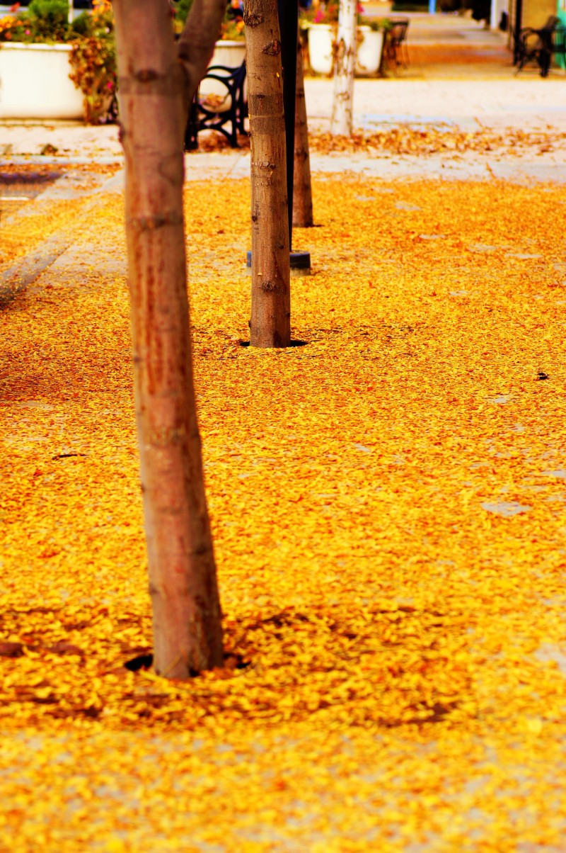 follow the yellow leaf sidewalk