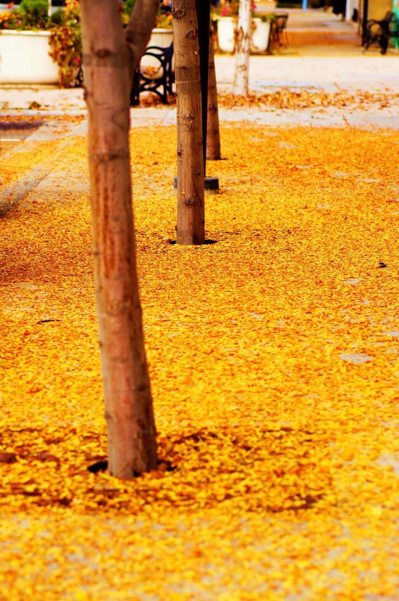 follow the yellow leaf sidewalk