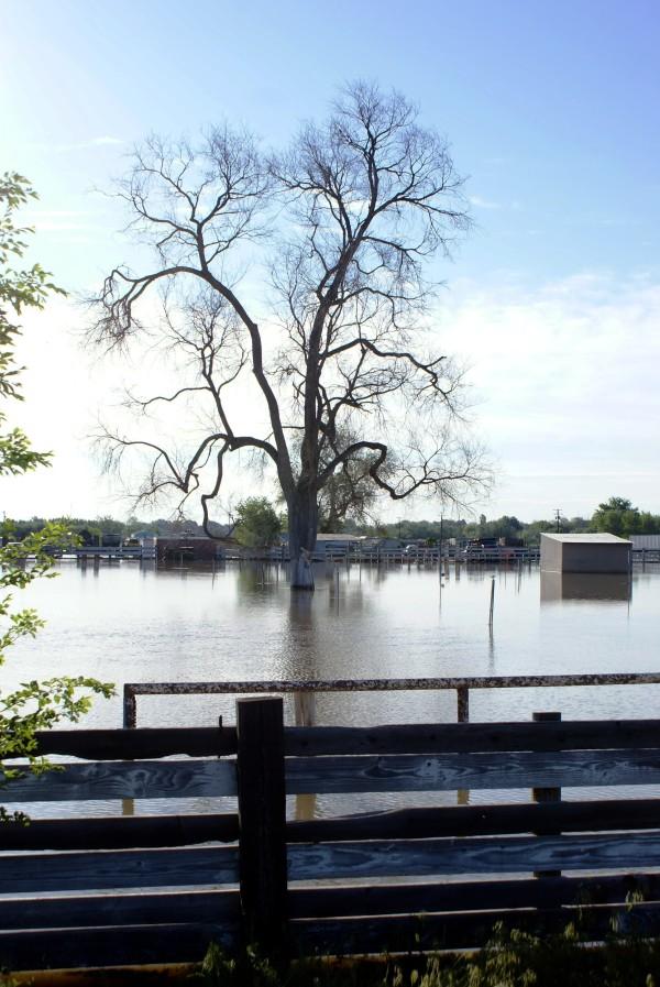 flooded pasture