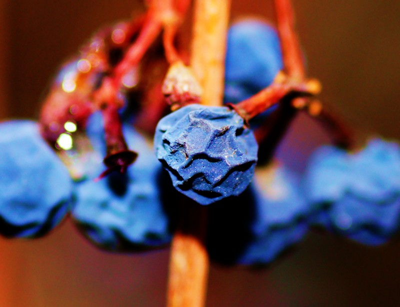 wrinkled berry