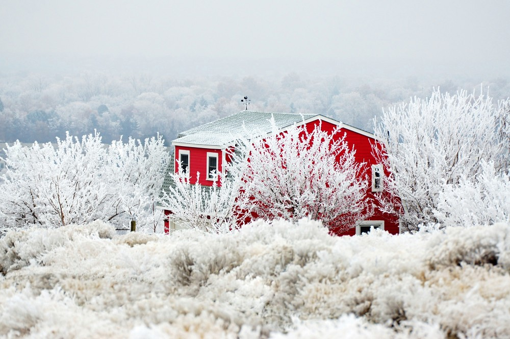 wintery red