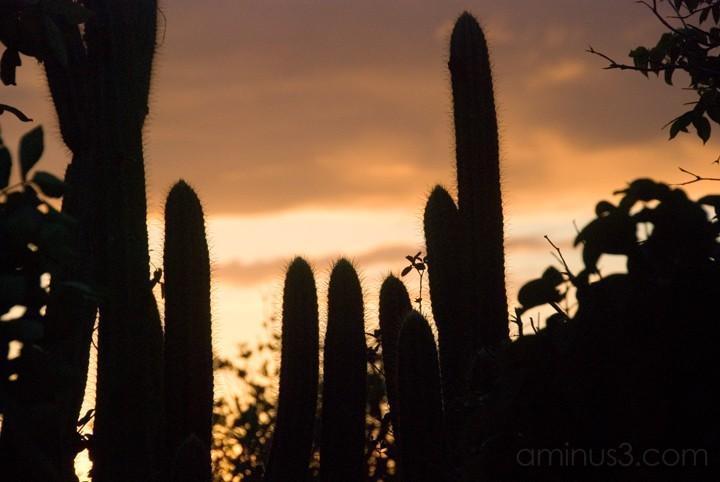 Cactus Sunset - Anegada, BVI