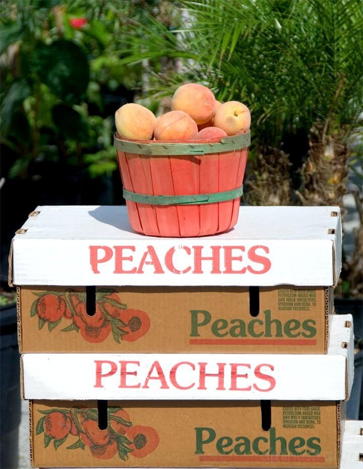 Peaches Peaches