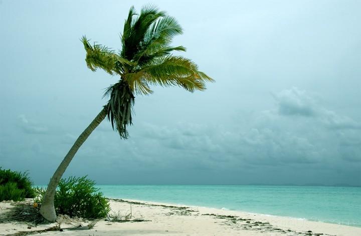 Anegada, BVI - Lone Palm