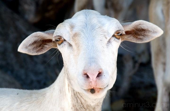 Anegada, BVI - Eyes, Ears, Nose