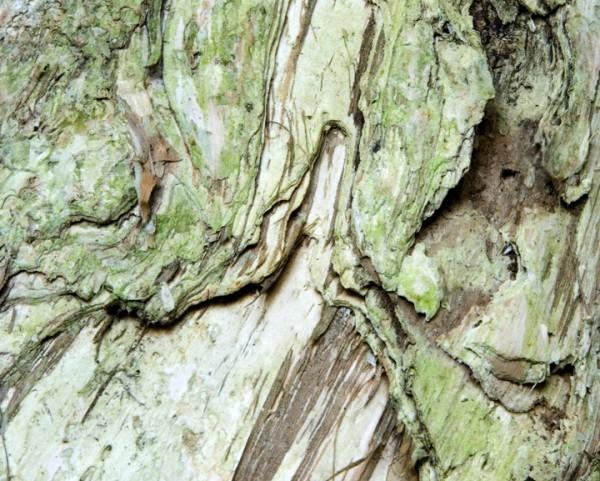 Tree Abstrunkt # 7