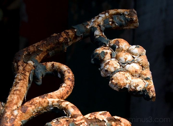 Rusted Grapes