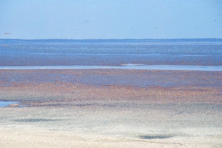 Anegada, BVI - Purple Sand