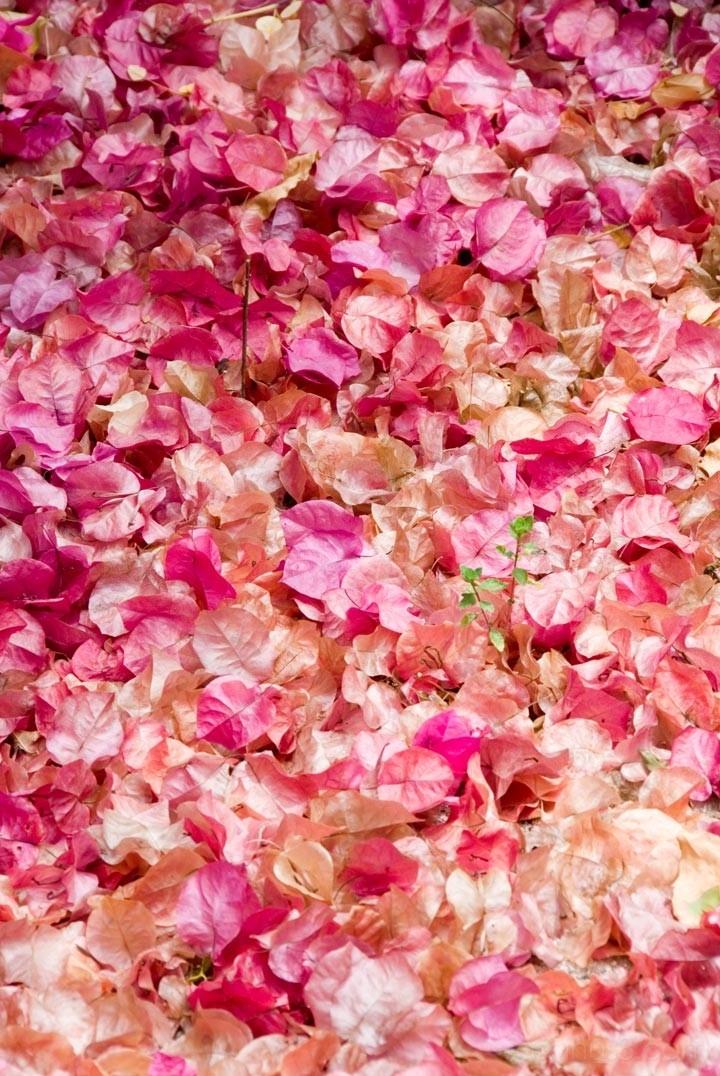 Anegada, BVI - Bed of Petals
