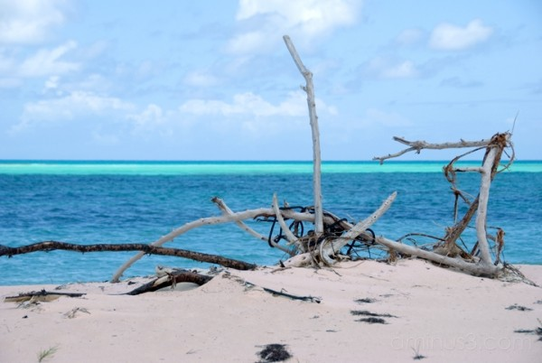 Anegada, BVI - Pomato Point Driftwood