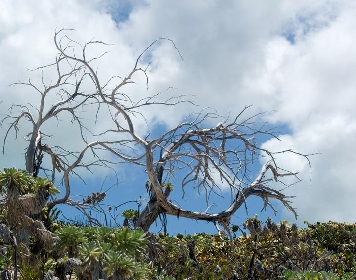 Anegada, BVI - Naked Branch