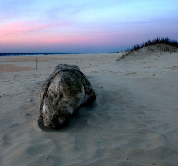 Beach Finds:  Log at Dawn