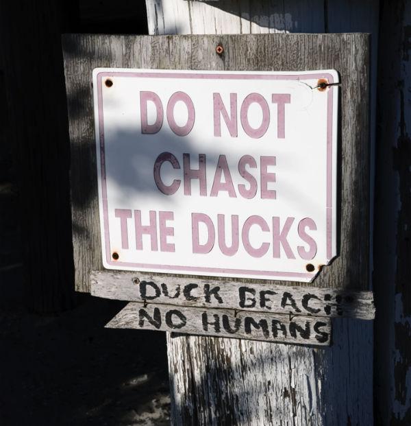 Memes:  Duck Beach
