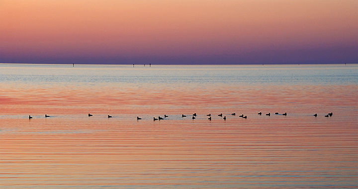 One Fine Evening:  Ducks at Sunset