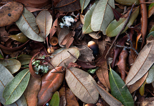 Fallen Leaves and Nuts