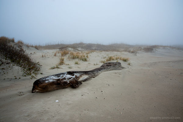Whale Log in Fog
