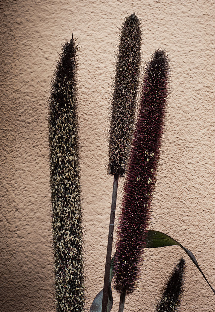 Simple Shapes:  Willow House Plant