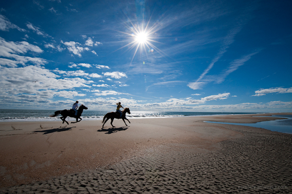 Galloping Down the Beach