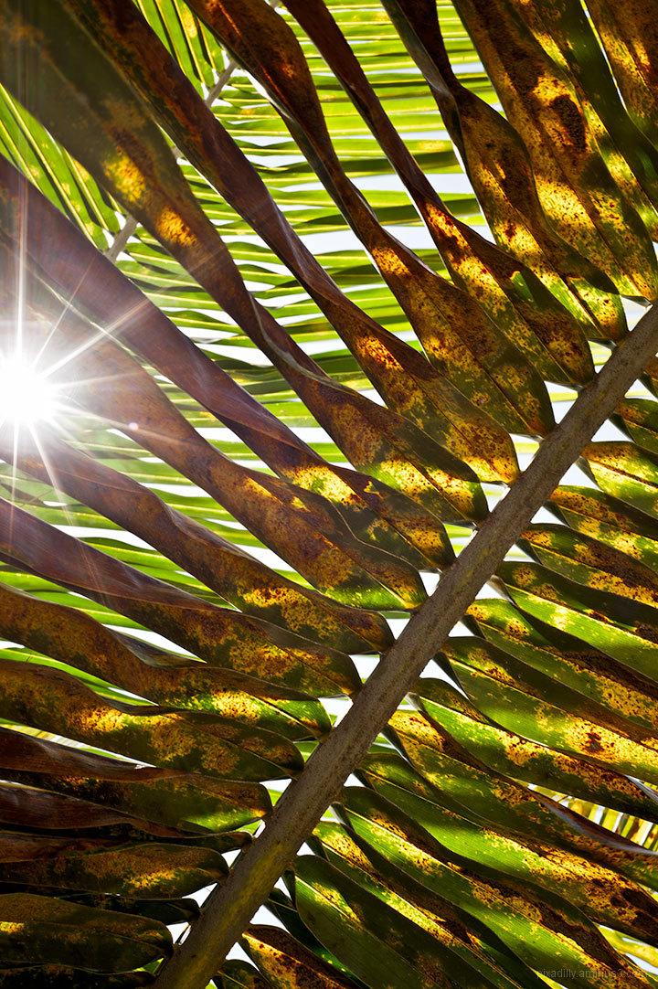 New Light 2012