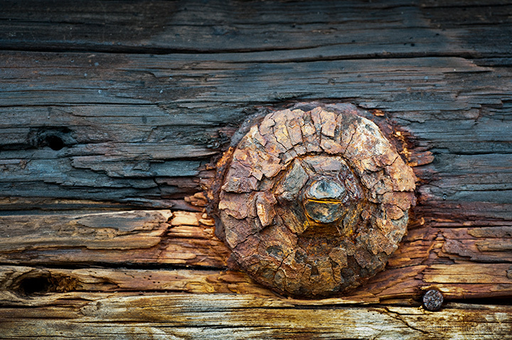 Old Bolt in Old Timber