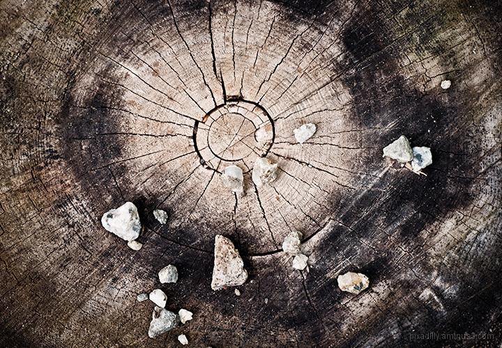 Tree Stump with Pebbles