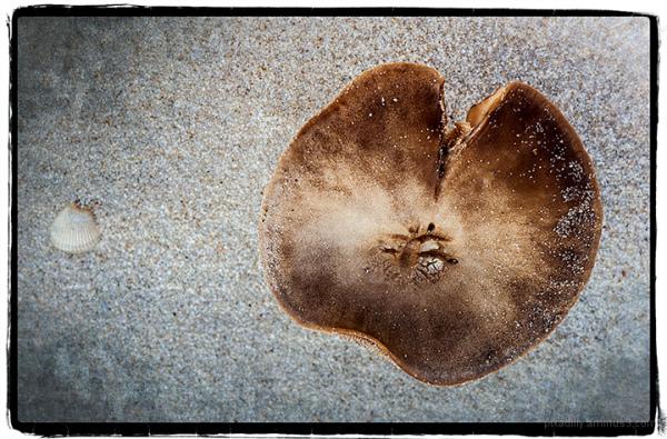 Mushroom and Small Shell