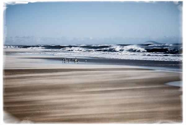 Birds on a Windy Beach