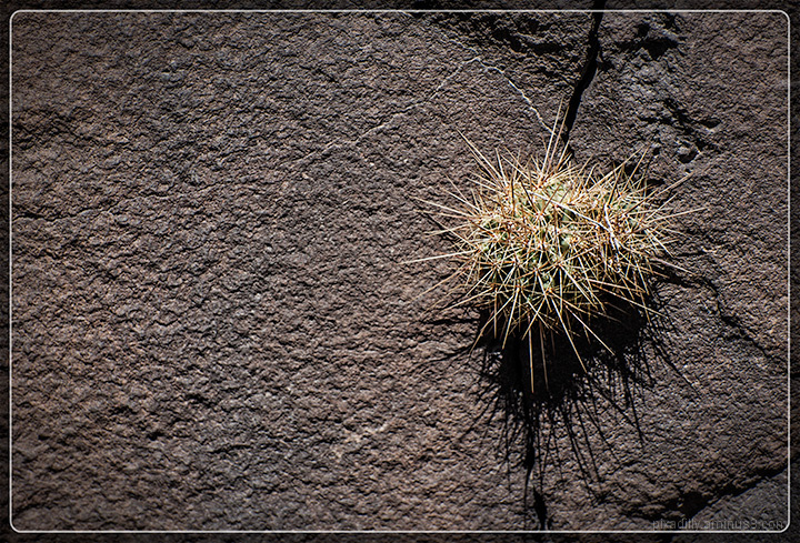 Rock Face Cactus