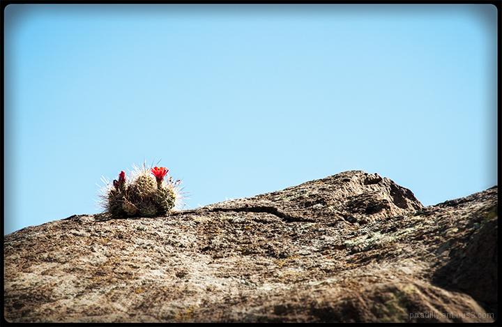 Claret on the Rocks