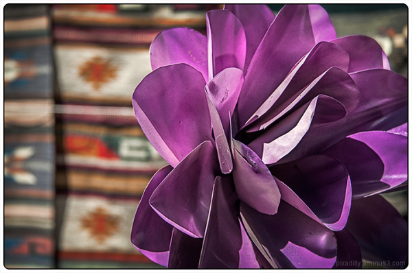 Purple Flower and Mexican Rugs