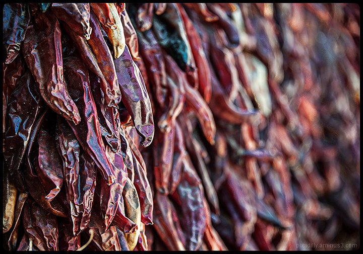 Wall to Wall Ristras