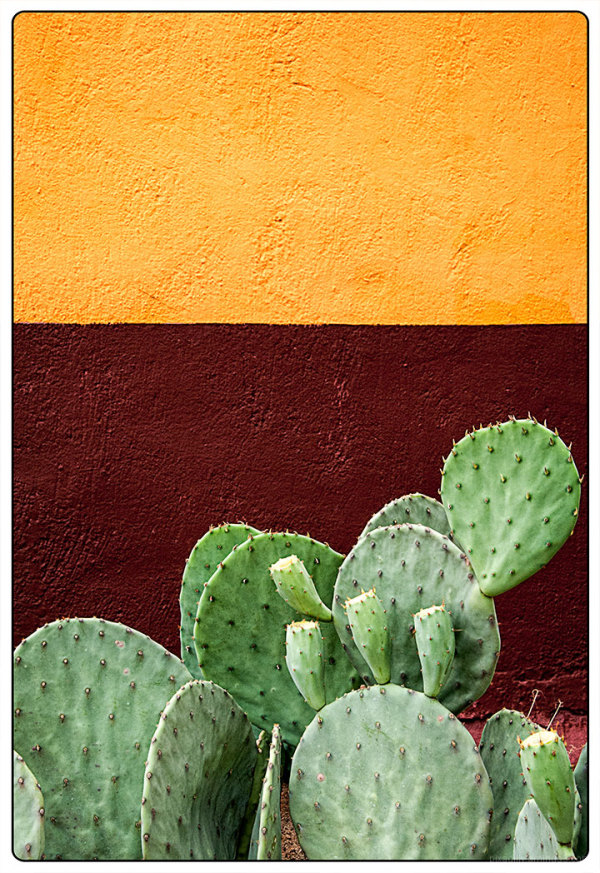 A Taste of Madrid, NM - Cactus with Red & Yellow