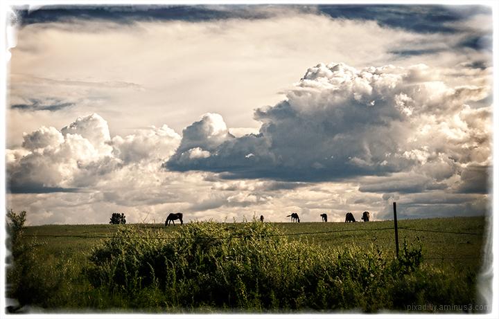 Horses on the Hillside