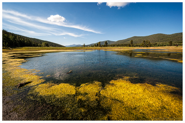 Shuree Pond