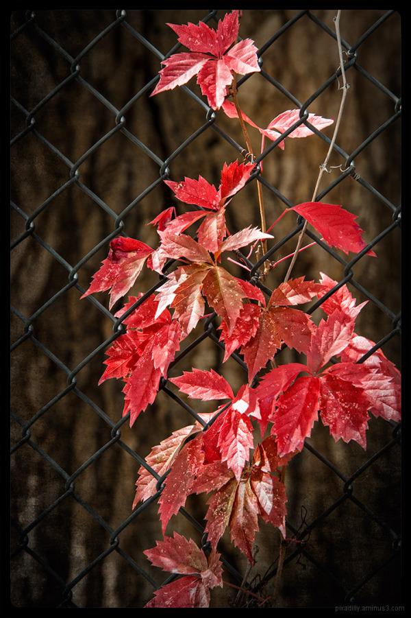Autumn Unchairned