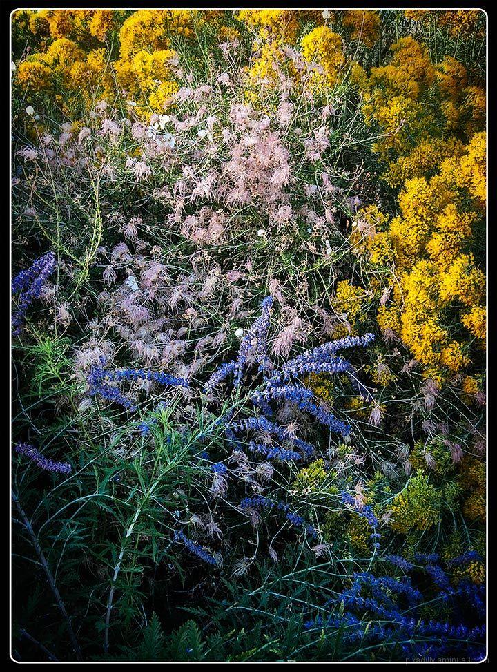 Late Season in the Garden