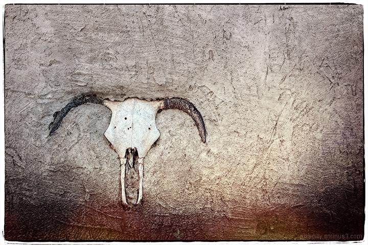 Skull in Wall