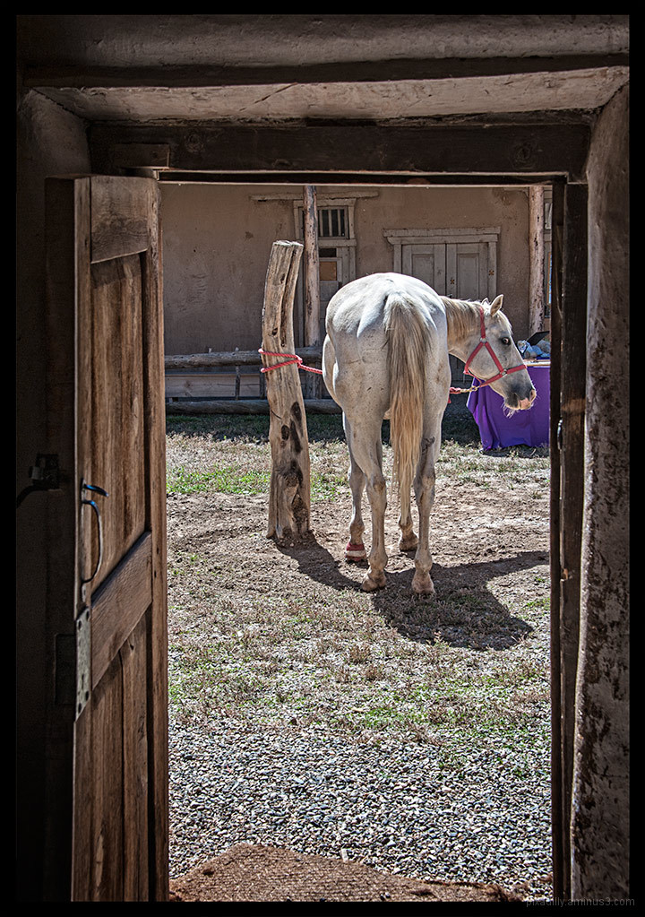 Horse in the Courtyard