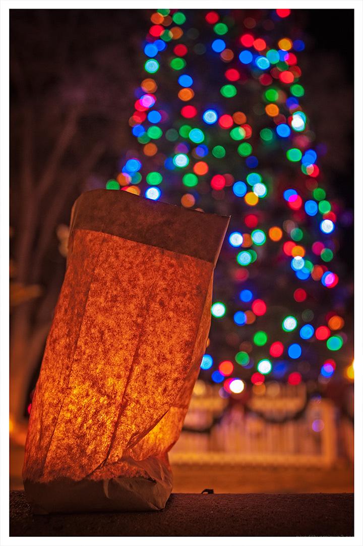Plaza Christmas Tree