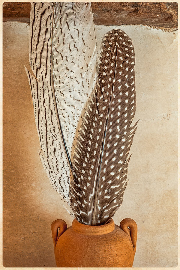 Feathers with Designs