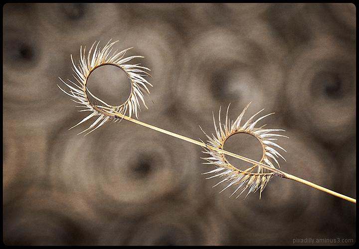 Loopy Grass